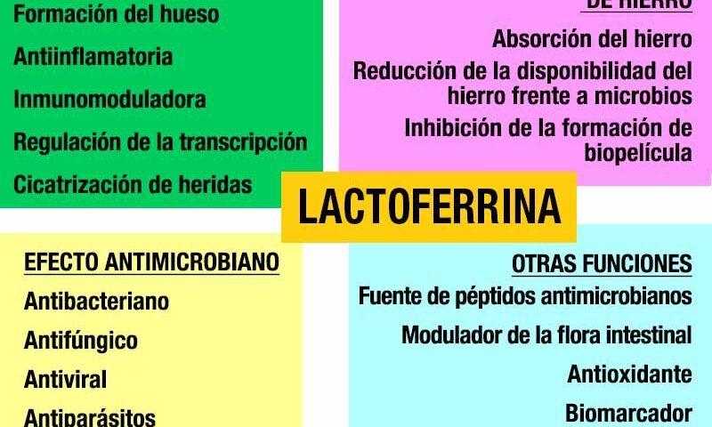 lactoferrina